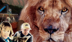 Lion_Ark_film_comp_250x250